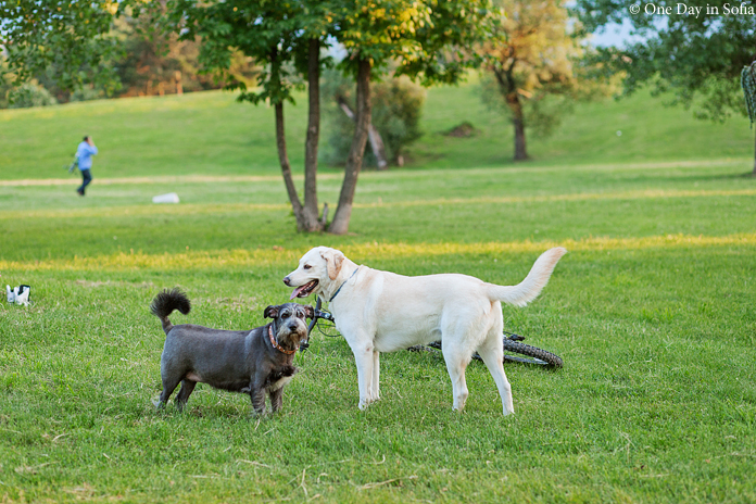 dogs at 'the dog park'