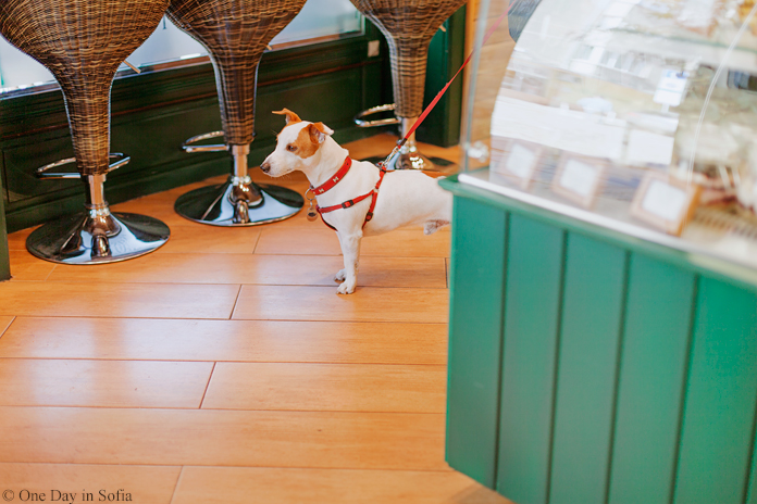 dog inside bakery