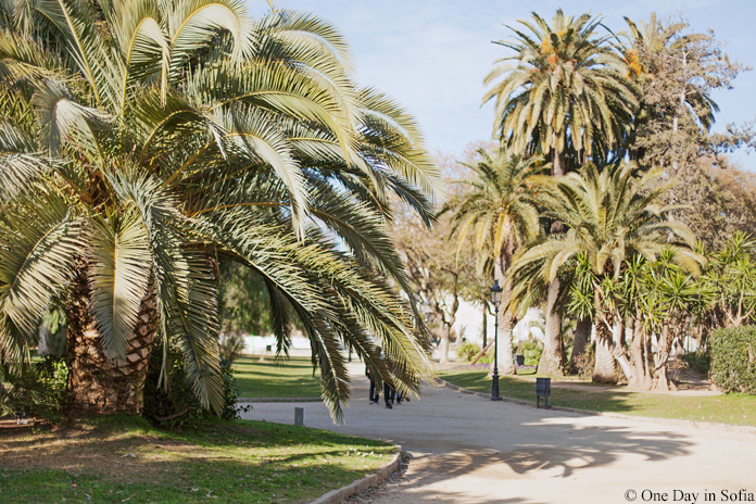 palm trees in Parc de la Ciutadella
