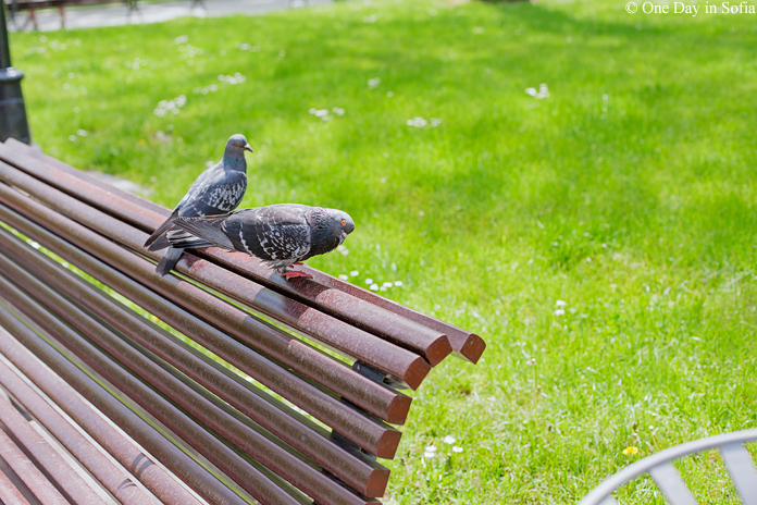 pigeons on a bench