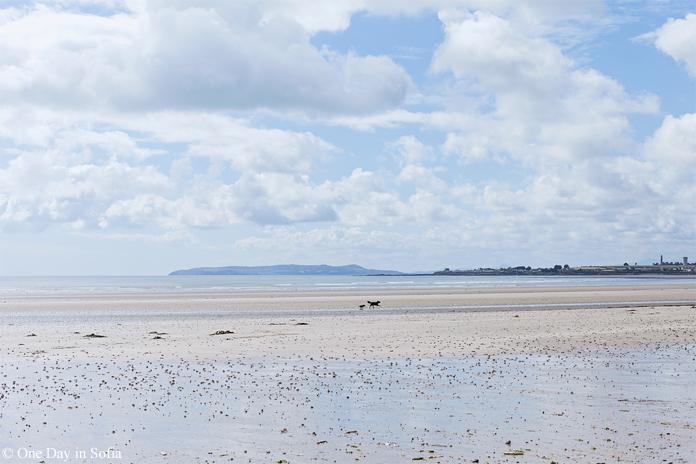dogs on Rush beach