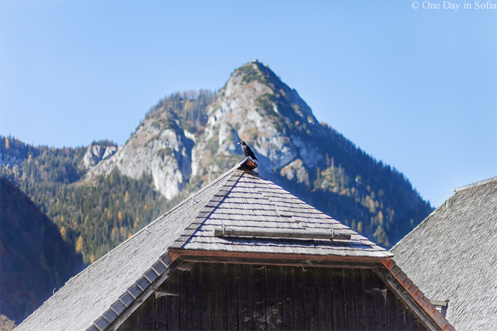 crow on boathouse at Königssee