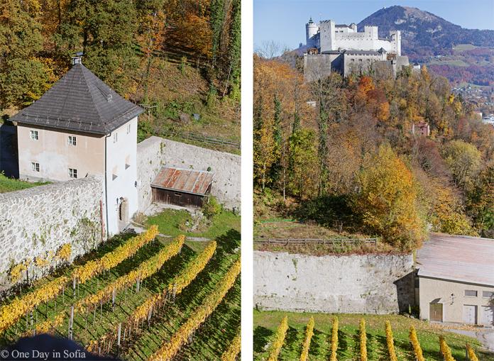 Fortress Hohensalzburg vineyard