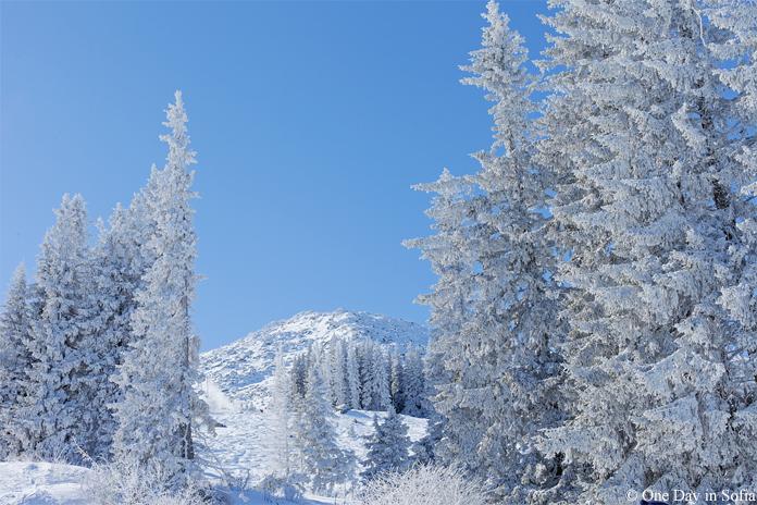 Vitosha mountain with snow