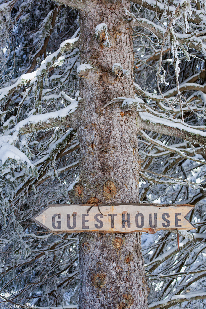 guesthouse sign on tree