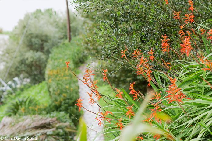 greenery on Corfu island