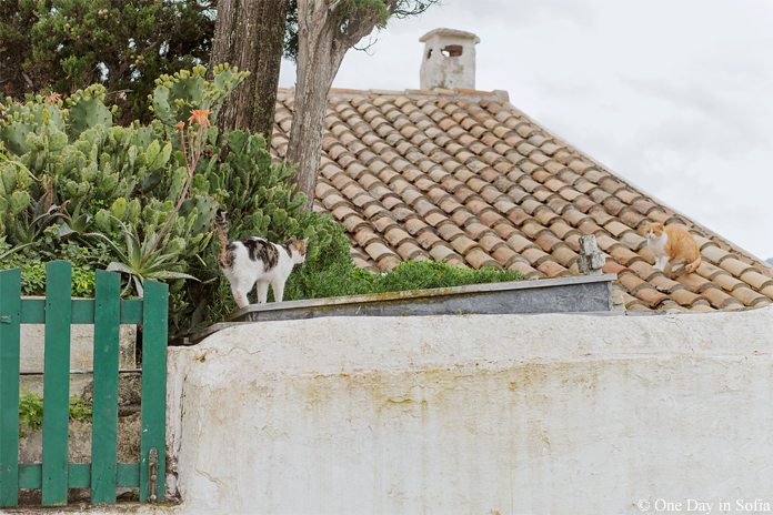 cats on Vlaherna Monastery roof