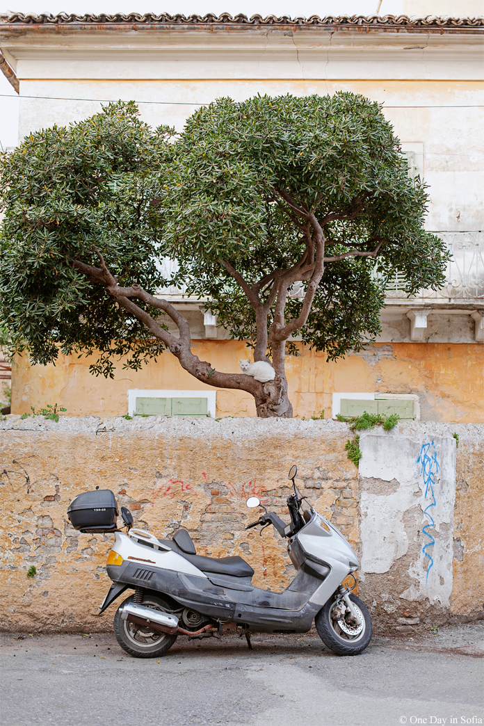 Cat on a tree on Corfu island