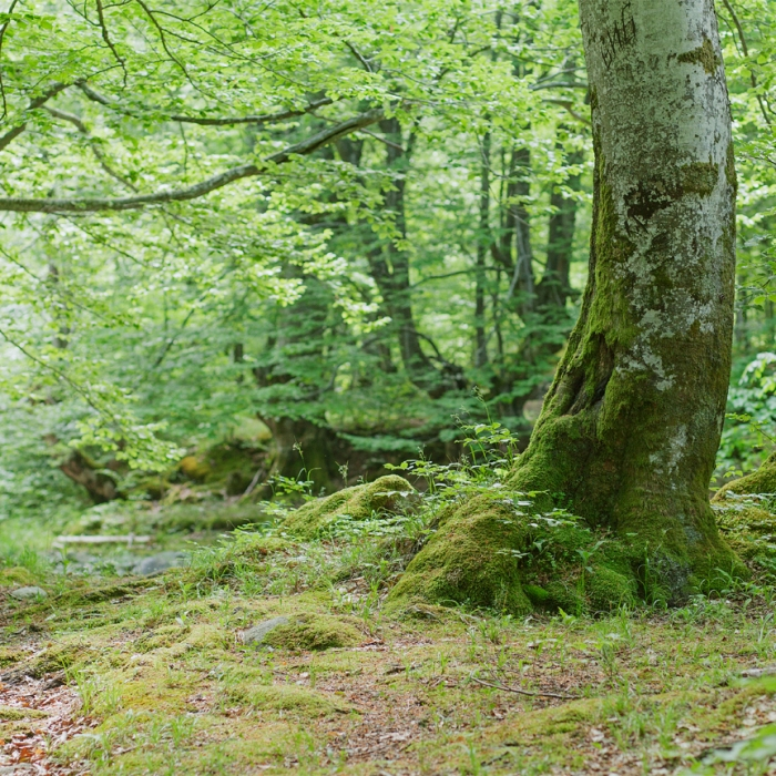 forest in Balkan mountains