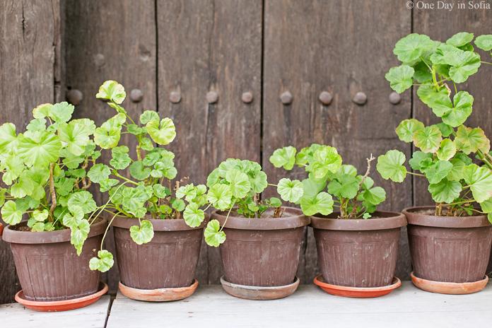 flower pots Tryavna