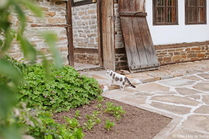 cat at Daskalova house Tryavna