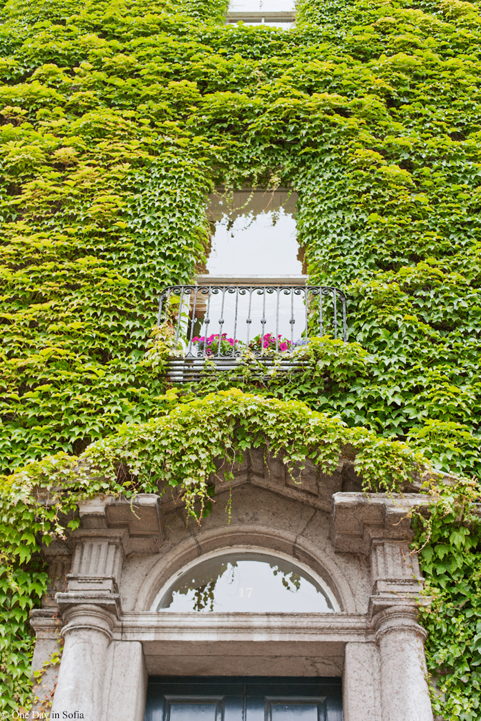 facade covered in plants