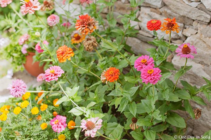 flowers in Lovech