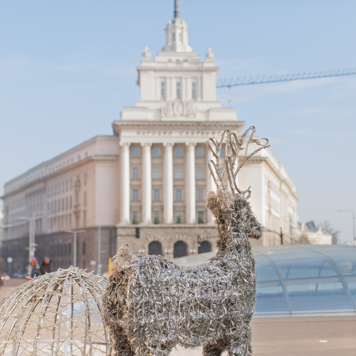 reindeer in Sofia center