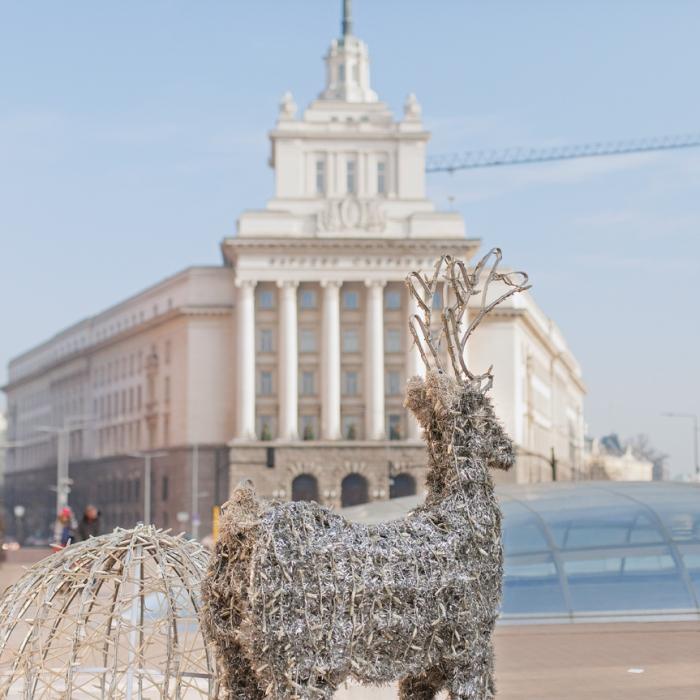 reindeer in Sofia center
